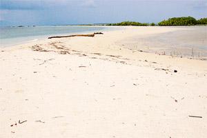 The sand bar of Snake Island.