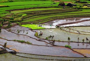 Farmers on the Nagacadan Rice Terraces.