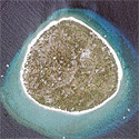 Satellite image of Balicasag Island in Panglao, Bohol