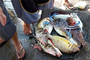 Seafood catch at Dalahican fish port
